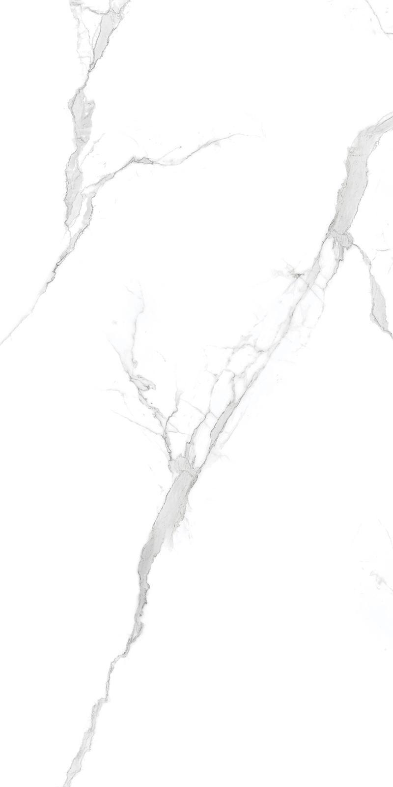 CTB12606鱼肚白