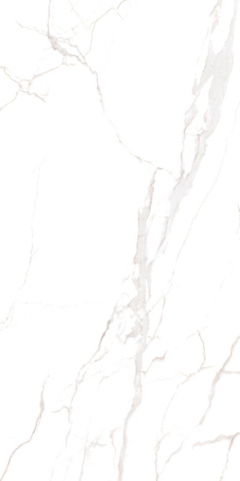 CGTB157505极品鱼肚白