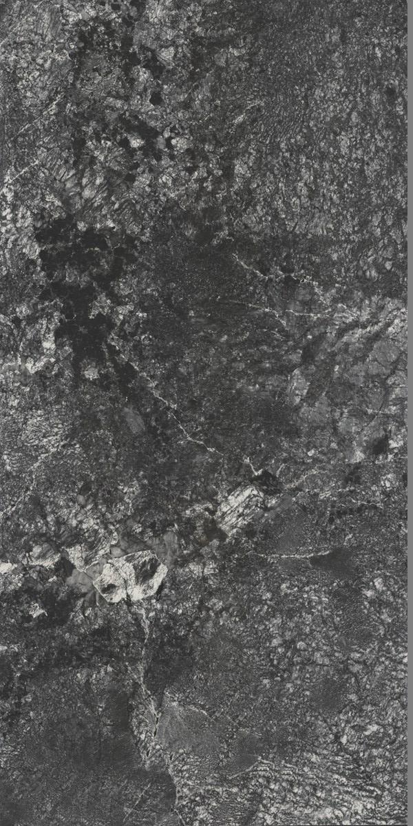 J-TSS918523 拉布拉多银星